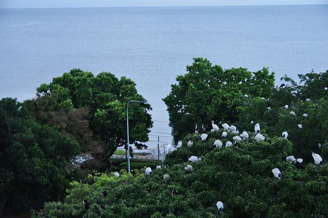 Bang Lang stork gardenv