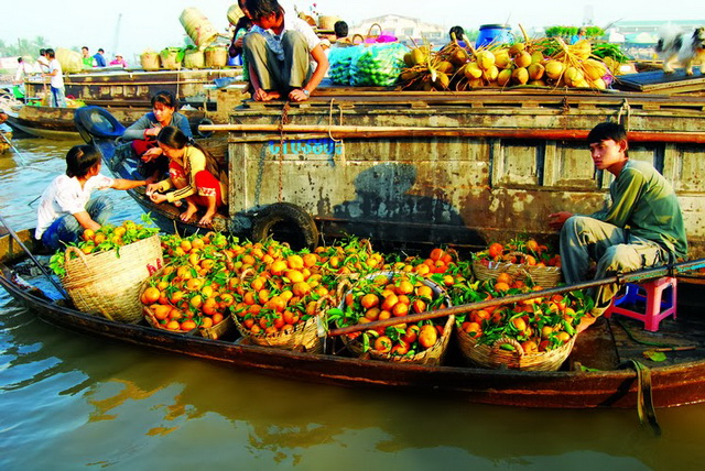 Phong Dien oranges is famous in Can Tho