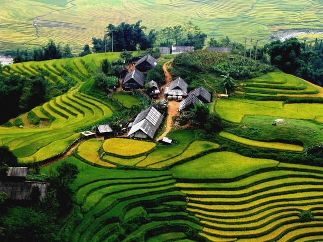 the rice terraces in Sapa
