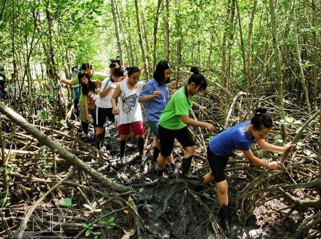 Discovering Vam Sat mangrove