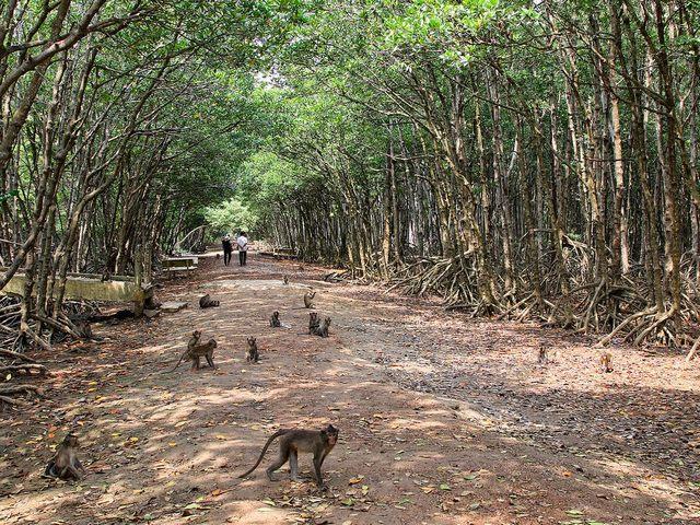 The island of monkey
