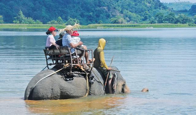 An elephant in Lak lake