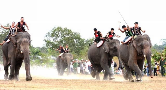 Elephant racing festival in Ban Don