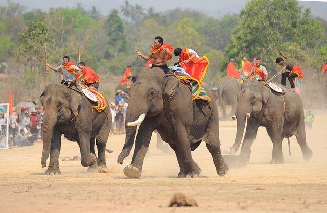 Elephant racing