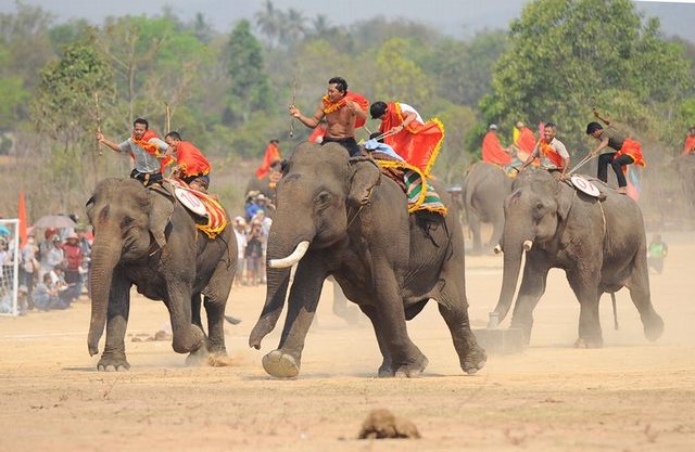 course Elephant