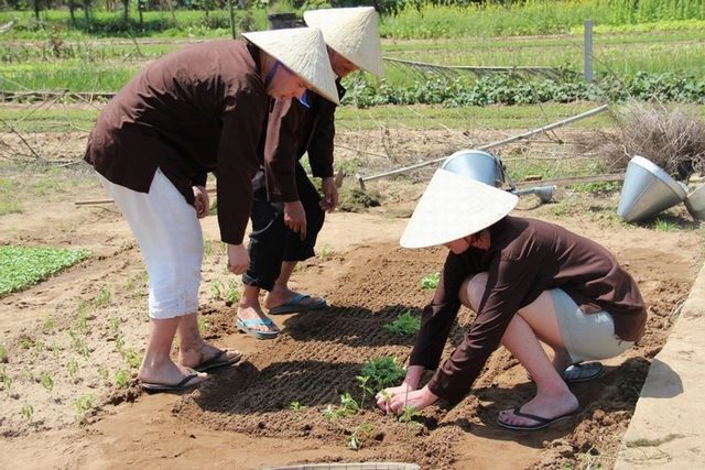 Guests become farmers in Tra Que vegetable village