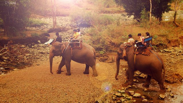 Tourists ride elephants