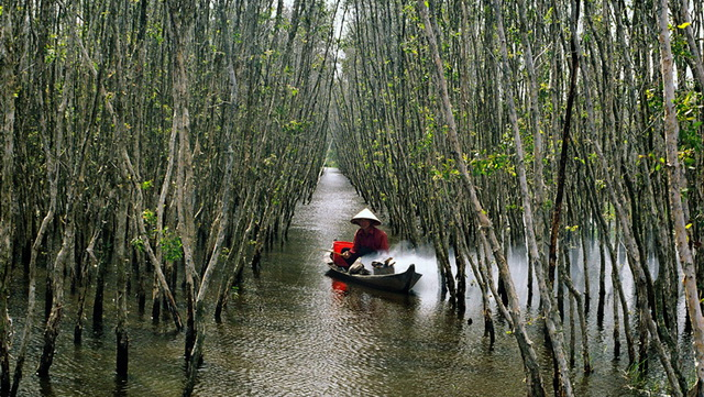 Inside of U Minh Ha mangrove forest