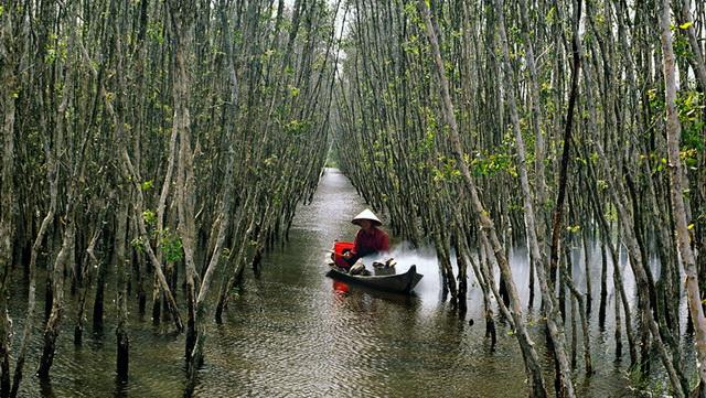 Inside of U Minh Ha mangrove forest