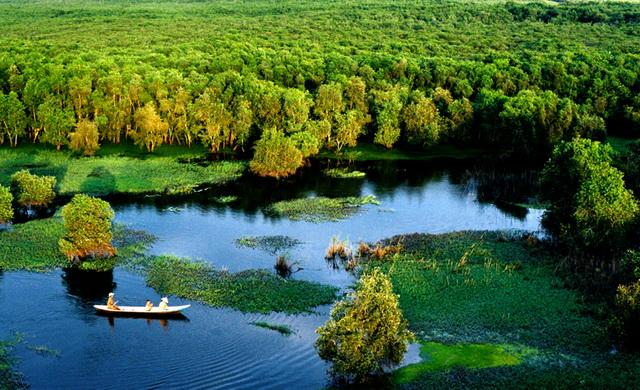 U Minh Ha mangrove forest