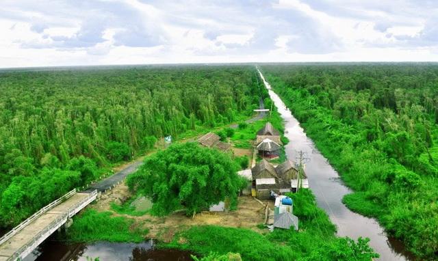 View of U Minh Ha mangrove forest
