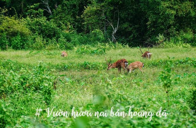 National Park of Cat Ba island