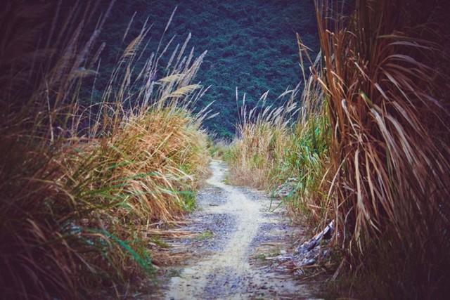 The path in Cat Ba