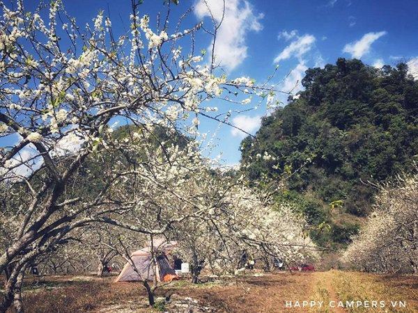 在桃花盛开的中间木州旅游营地
