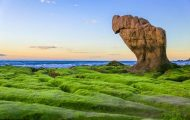 go to Co Thach beach to watch the green moss covered the rocks