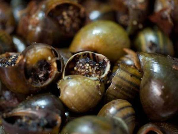 Food from snails – special street dish of Vietnam