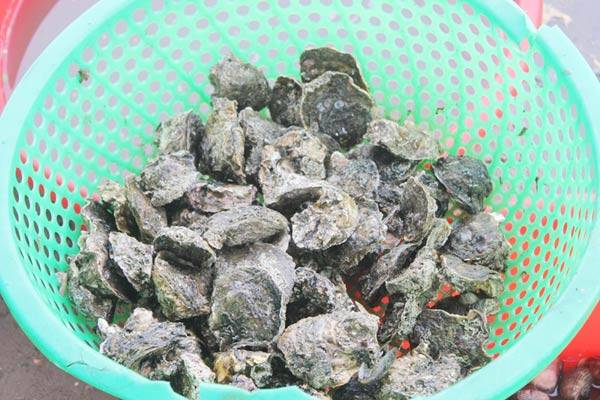 Oysters 50,000 VND per kg
