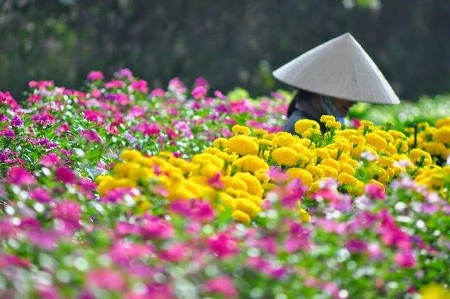 ดอกไม้สีสดใส Tet