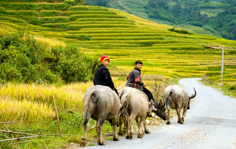 The way to the villages in Sa Pa