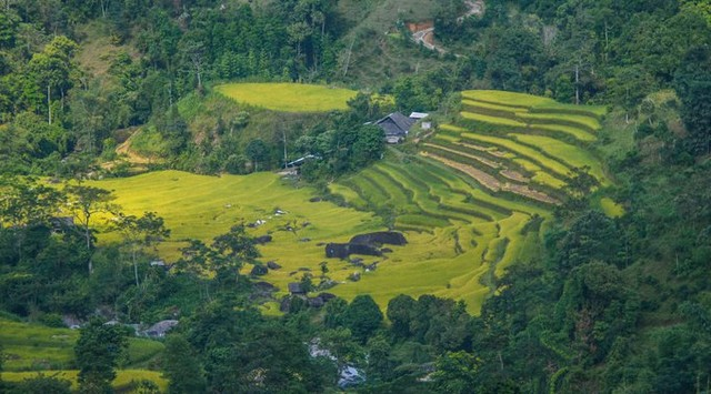 A terraced rice field in Ho Thau commune is located between the forest areas in the afternoon sun.