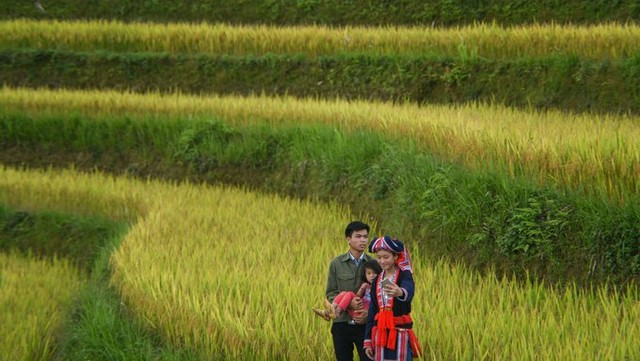 "A young Dao family took photo of ""the yellow season"" in Ho Thau commune."