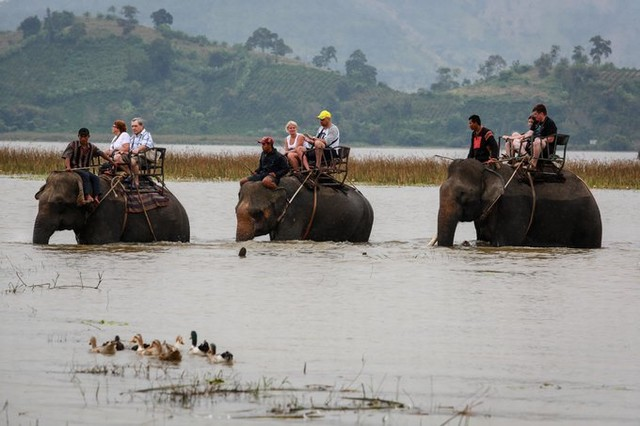 Elephant rides are available in many packages