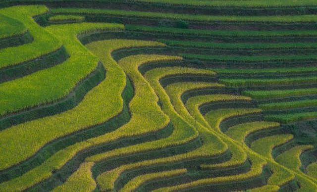 Hoang Su Phi rice terraces are located in six communes: Ban Luoc, San Sa Ho, Ban Phung, Ho Thau, Nam Ty and Thong Nguyen.