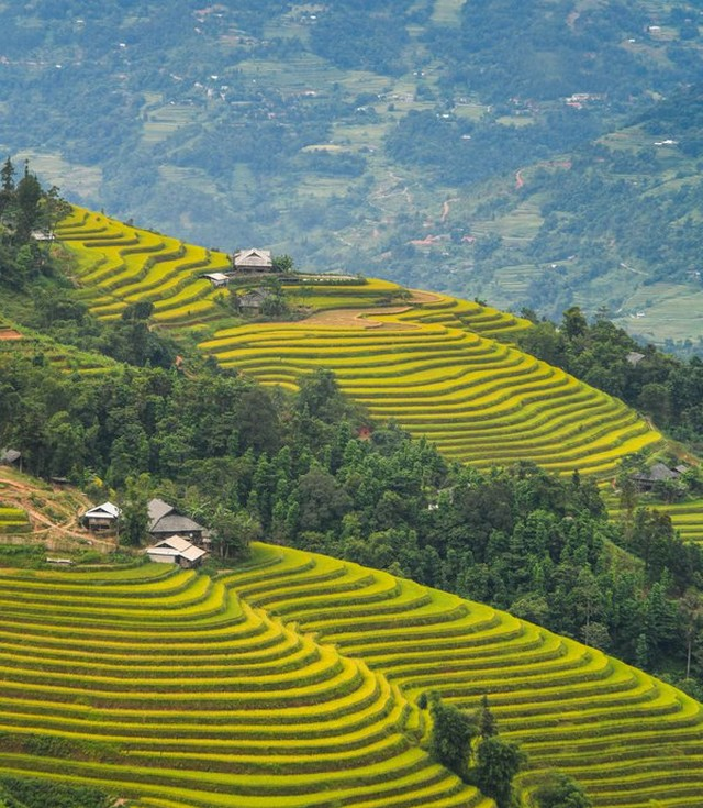 Rice terraces are beside the road leading to Ho Thau commune