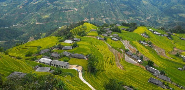 terraced fields in Hoang Su Phi