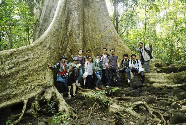 A giant tree in Cat Tien National Park