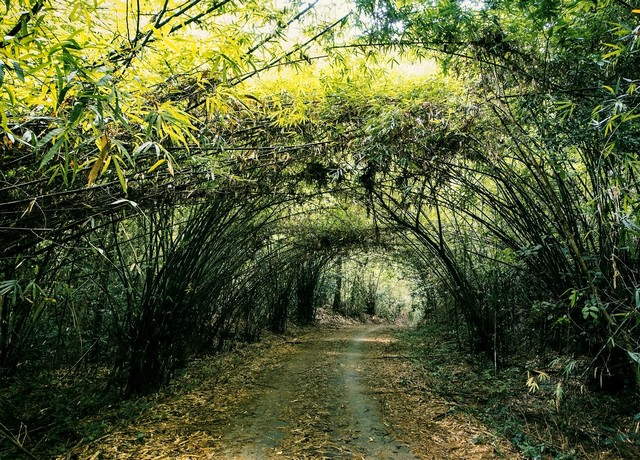 bamboo way at Cat Tien National Park