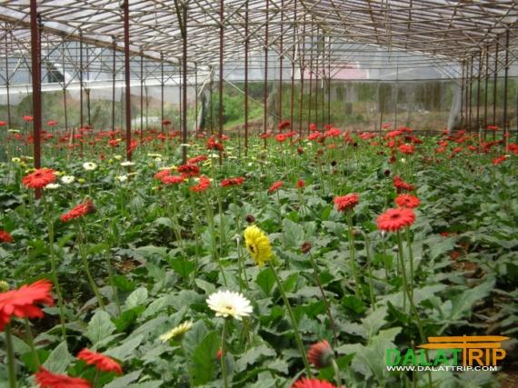 Flower Farm Dalat
