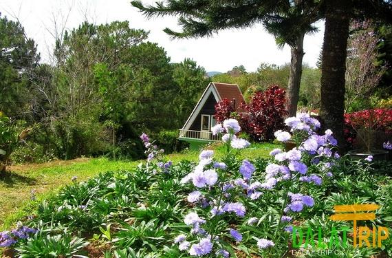Minh Tam jardin fleuri