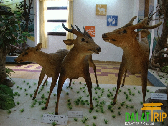Animal Researching