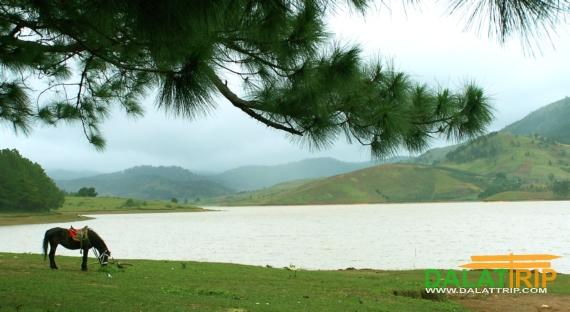 Golden Stream Lake