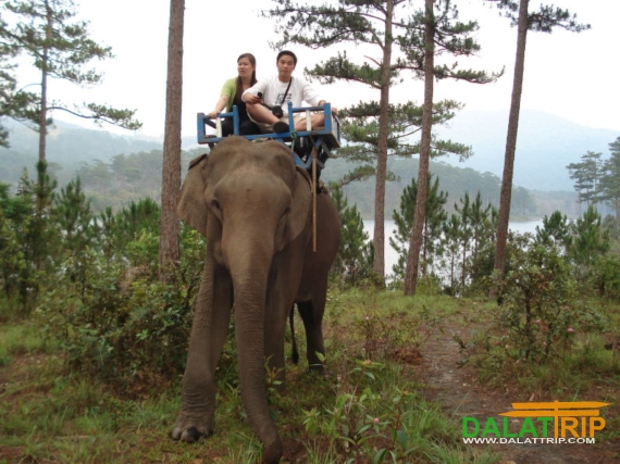 Dalat Vietnam Elephant Riding