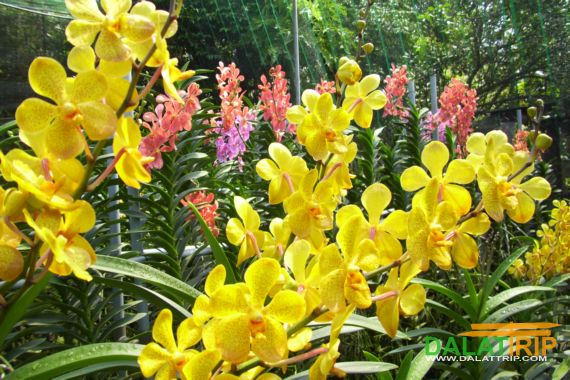 The Precious Collection of Orchid in Dalat