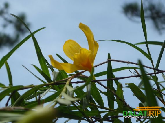 Orchid in Dalat city