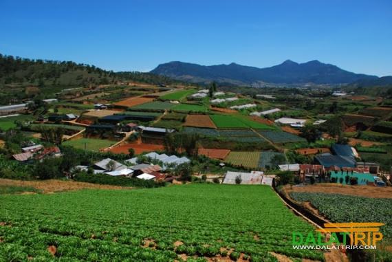 Farms in Dalat