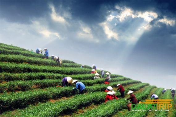 Tea Cultural Week