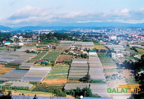 Dalat Farms