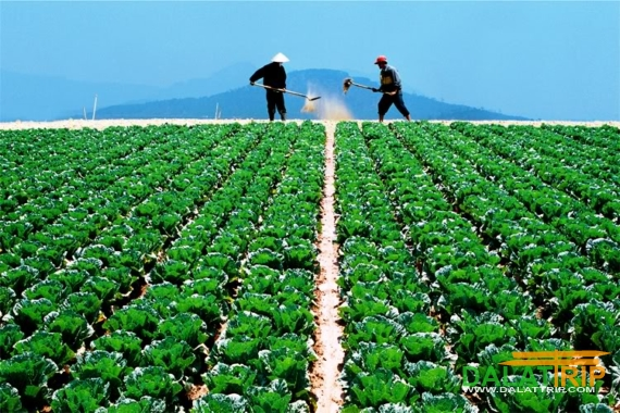Dalat Vegetables