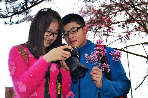 Cherry Blossom in Dalat
