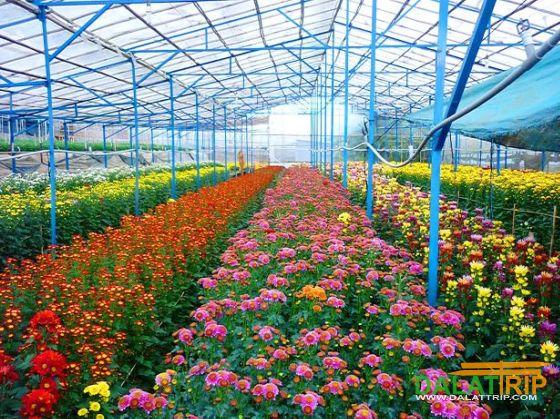 Dalat flower industry