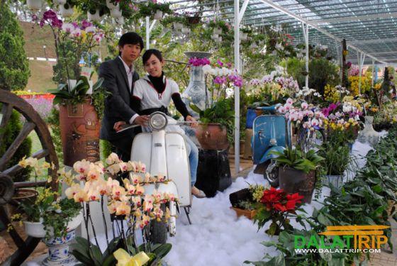 Orchidées de Dalat