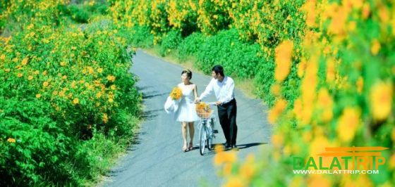 Wild Sunflowers of Dalat