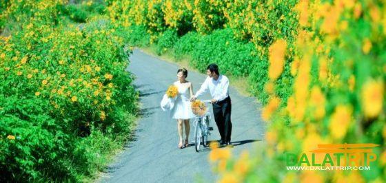 Wild Sunflowers of Dalat