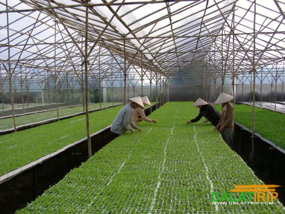 Dalat Bio Technology - High tech Applied Agriculture Zone