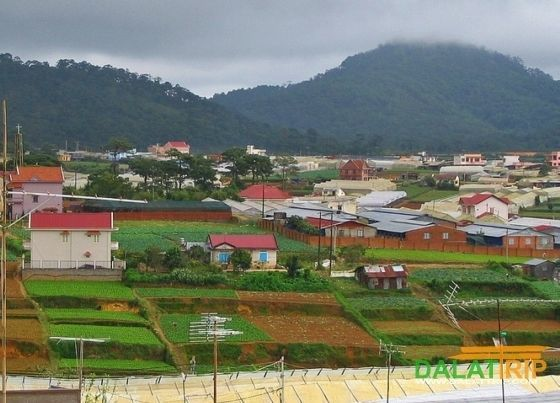 Dalat fields