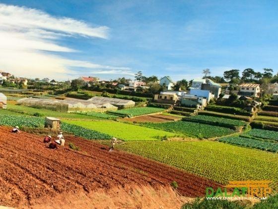 Dalat's farmers lifestyles